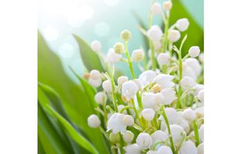 Un jardin coquet pour le mois de mai, les étapes à franchir