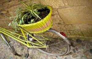 Plante dans panier à vélo