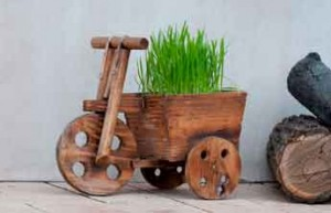 Vélo bois et plante aromatique