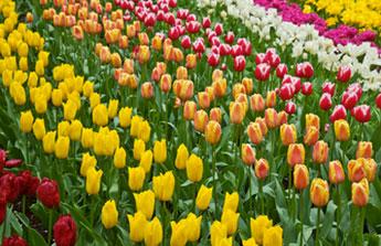 En avril, tout le monde file dans le jardin
