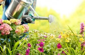 jardin et ext rieur tout est parfait en juillet blog ma maison mon jardin. Black Bedroom Furniture Sets. Home Design Ideas