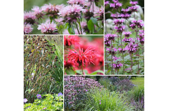 Jardin et extérieur, tout est parfait en juillet !