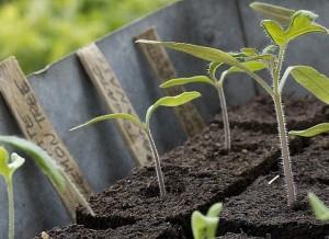 planter et semer