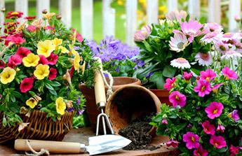 Conseils de jardinage au mois d'août pour avoir un extérieur 'in' !