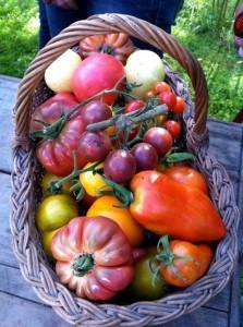 Panier-tomates