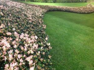 Pelouse-et-jardin-ornement