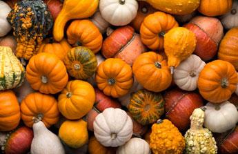 S'occuper de son jardin en octobre, le bichonner avant  la saison froide !