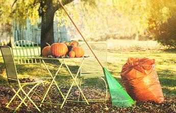 Novembre : aux petits soins avec votre jardin