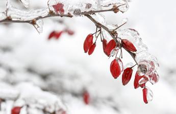 Janvier : les travaux du jardin en attendant les beaux jours