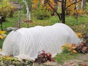 Protection hivernale plantes