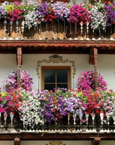 Une rambarde de balcon bien fleurie
