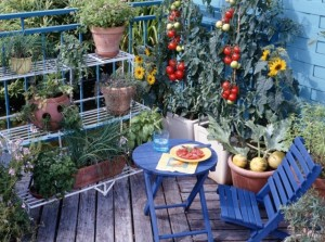 créer un potager au balcon