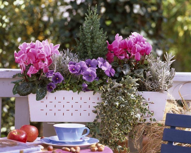 Le jardin en mode urbain blog ma maison mon jardin - Plante balcon hiver ...