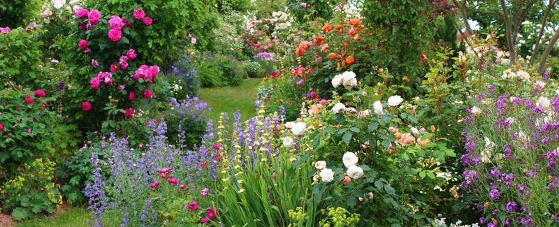 jardin à l'anglaise très fleuri et naturel
