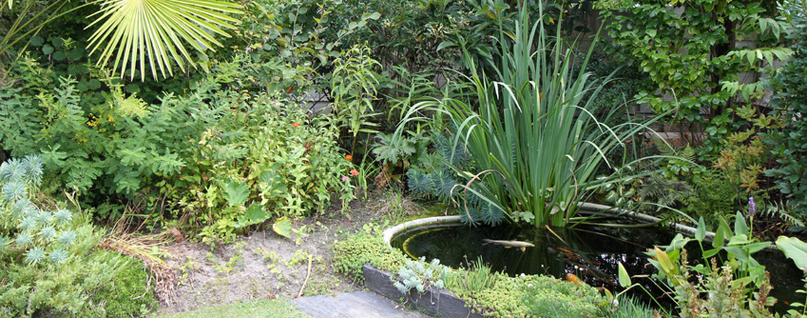 Le jardin en mode poissons et bassins naturels blog for Bassin de jardin poisson