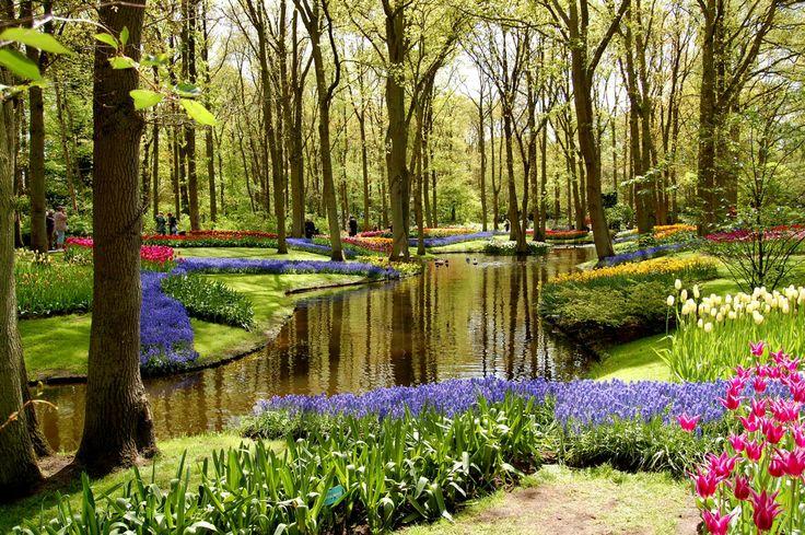 Un parterre de tulipes au Parc floral de Keukenhof