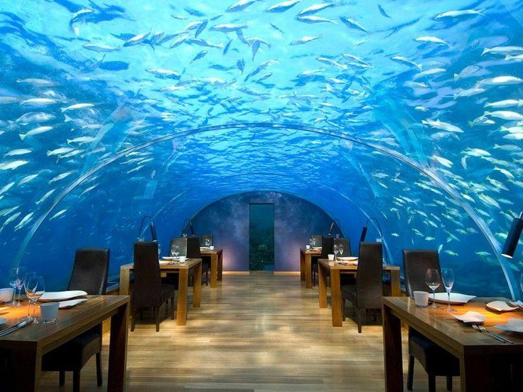 Hotel-restaurant aux Maldives pour explorer les fonds marins