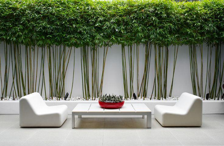 jardin zen avec mur de bambou