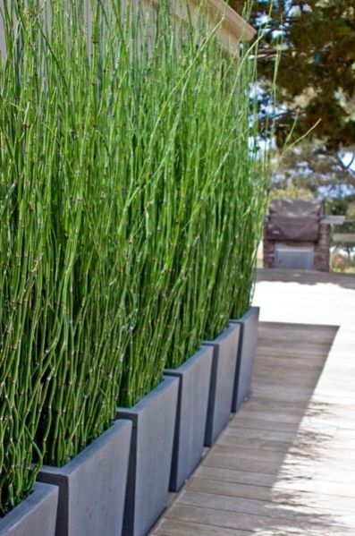 Bamboo Privacy Screen Planter 397 x 599