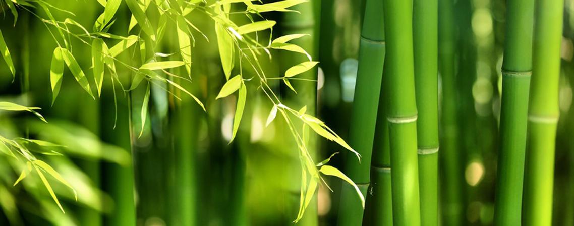 Le bambou la touche d co au jardin blog ma maison mon for Mon permis zen