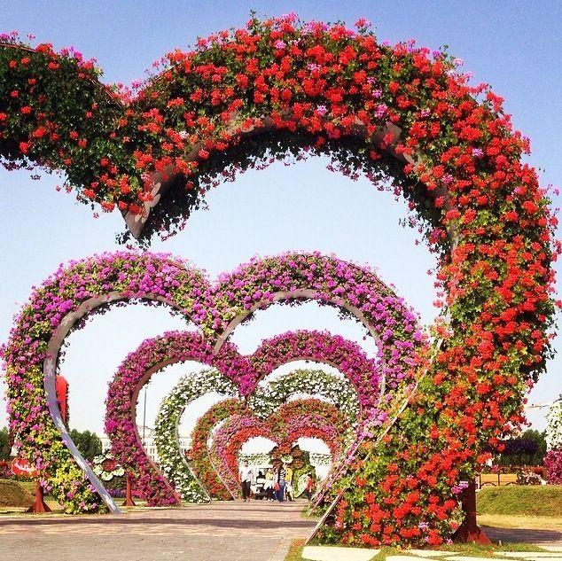Miracle Garden à Dubai avec ses parterres de fleurs et ses haies architecturales