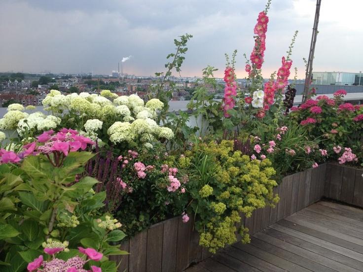 Fleurs et plantations diverses pour toit terrasse