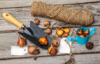Accessoires de jardinage et bulbes