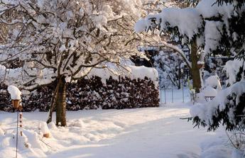 Comment protéger les plantes du froid ?