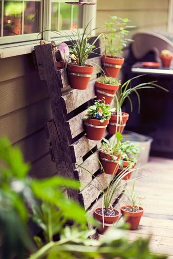 l'astuce des palettes pour créer un mur végétal DIY