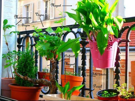 Conseils de jardinage pour cultiver des aromates au balcon for Plante murale pas cher