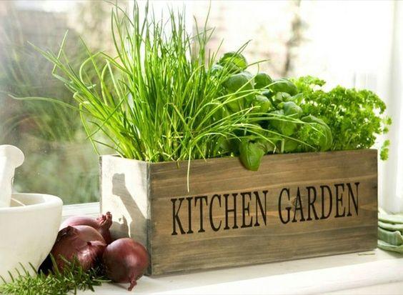 lot de plantes aromatiques à l'intérieur de la cuisine