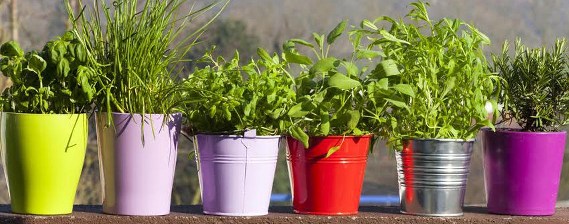 conseils de jardinage pour cultiver des aromates au balcon
