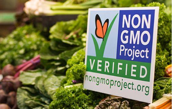 projet de plantations sans OGM