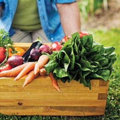de bons fruits et légumes bio du jardin