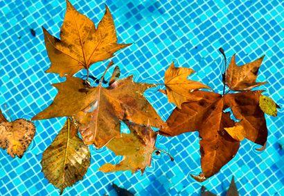 des feuilles mortes tombent dans la piscine au printemps