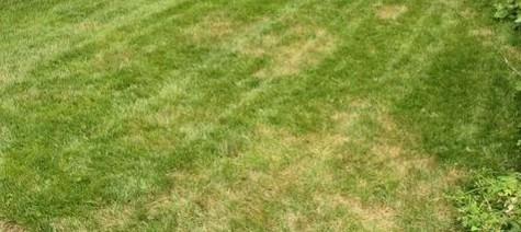 Il faut éviter la pelouse jaune pour un jardin chic