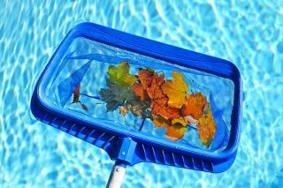 récupérer les feuilles mortes avec une épuisette dans la piscine