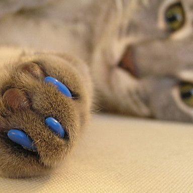 des cache griffes pour protéger les meubles des chats