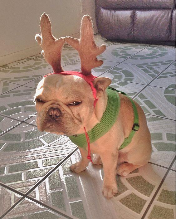 La déco pour Noël, c'est sur vos murs ou votre sapin, pas sur vos animaux !