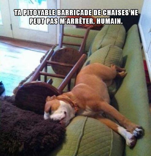 un chien malin qui s'étale sur le canapé