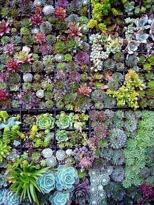 Un mur bien fleuri pour une déco végétale garantie