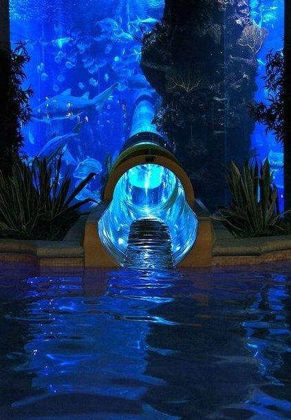 Toboggan avec aquarium à requins à l'hôtel Golden Nugget de Las Vegas